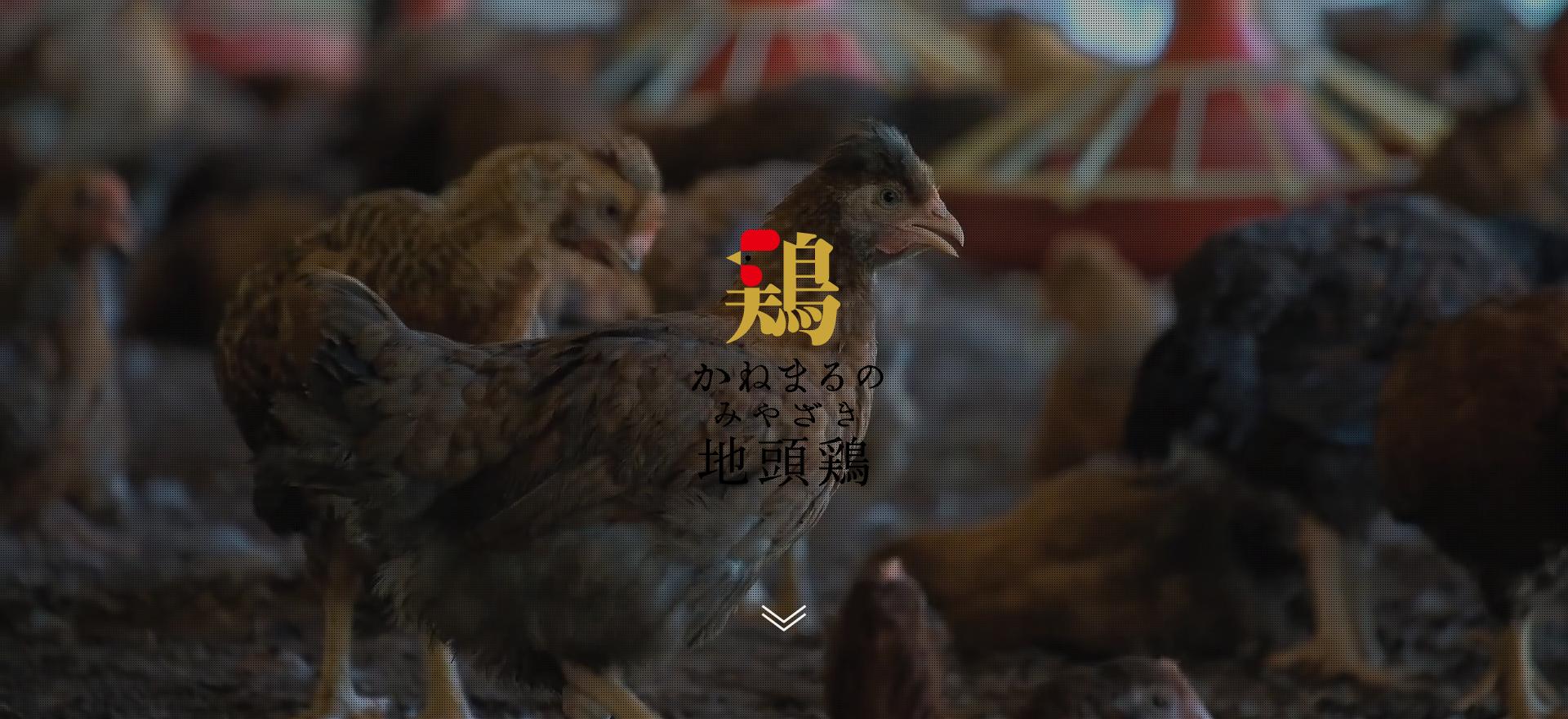 かねまるのみやざき地頭鶏